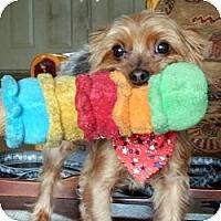 Adopt A Pet :: Duke - Homestead, FL