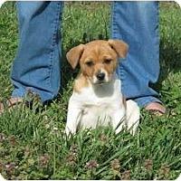 Adopt A Pet :: Tristan - Westbrook, CT