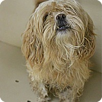 Adopt A Pet :: Mika - Lorain, OH
