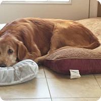 Adopt A Pet :: Fred - Yorktown, VA