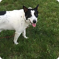 Adopt A Pet :: Oreo - Acushnet, MA