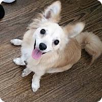Adopt A Pet :: Anuk - Burbank, CA