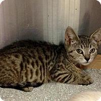 Adopt A Pet :: Sheldon - East Brunswick, NJ