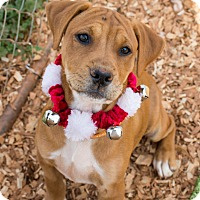 Adopt A Pet :: Faith - $250 - Seneca, SC