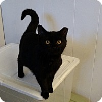 Adopt A Pet :: Layla - Wakinsville, GA