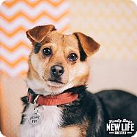 Adopt A Pet :: Quint - Portland, OR