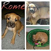 Adopt A Pet :: Rome - Gainesville, FL