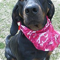 Adopt A Pet :: Maddie - Menomonie, WI