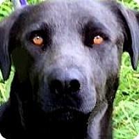 Adopt A Pet :: SANDY(GENTLE-CALM-A DOLL! - Wakefield, RI