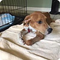 Adopt A Pet :: Chrissi - Keyport, NJ