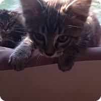 Adopt A Pet :: Big Ben - Stafford, VA
