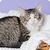 Adopt A Pet :: Dewey - Apache Junction, AZ
