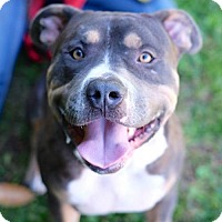 Adopt A Pet :: Spencer - Santa Monica, CA