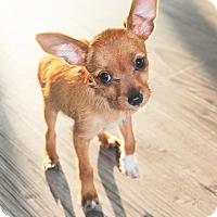 Adopt A Pet :: Peanut Butter - Agoura Hills, CA