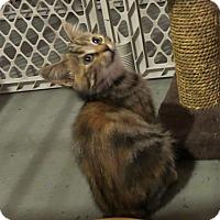 Adopt A Pet :: Geneva - Geneseo, IL