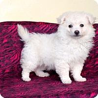 Adopt A Pet :: Granola - Los Angeles, CA