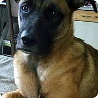 Adopt A Pet :: Gracie Mae - Overland Park, KS