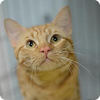 Adopt A Pet :: Fanta 162226 - Atlanta, GA
