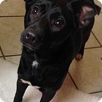 """Adopt A Pet :: Polly """"tallie"""" - E. Greenwhich, RI"""