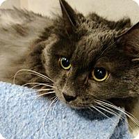 Adopt A Pet :: Spooky - Chaska, MN