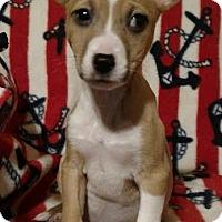 Adopt A Pet :: York - Flossmoor, IL