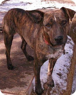 SUKI | Adopted Dog | 44 | Pie Town, NM | Catahoula Leopard Dog/Terrier ...
