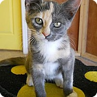 Adopt A Pet :: Mirage - Mobile, AL