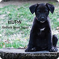 Adopt A Pet :: Kelton - Southington, CT