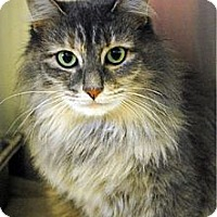 Adopt A Pet :: Halle - East Hanover, NJ