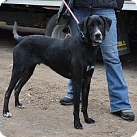 Adopt A Pet :: Ronny - Hamilton, ON