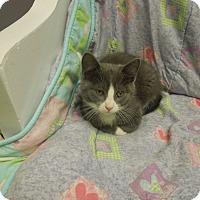Adopt A Pet :: Stefan - Medina, OH