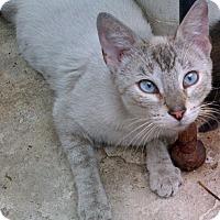 Adopt A Pet :: Nala - Horsham, PA