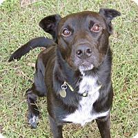Adopt A Pet :: Pogo - Huntsville, AL