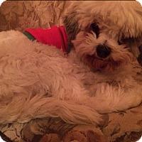 Adopt A Pet :: Spring - Lomita, CA