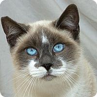 Adopt A Pet :: Caesar M - Sacramento, CA