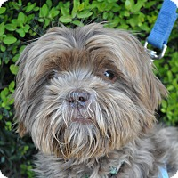 Adopt A Pet :: Chewy - Atlanta, GA