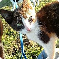 Adopt A Pet :: Jaslene - Camilla, GA