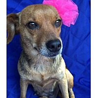 Adopt A Pet :: Momma Lilly - Little Rock, AR