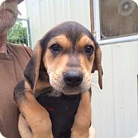 Adopt A Pet :: Louie - Hohenwald, TN