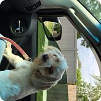 Adopt A Pet :: Archie - Jupiter, FL