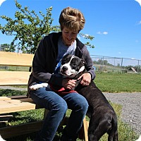 Adopt A Pet :: Baby D - Elyria, OH