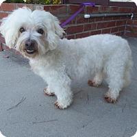 Adopt A Pet :: Brody - Los Angeles, CA