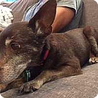 Adopt A Pet :: Ruby (Mobile, AL) - McDonough, GA