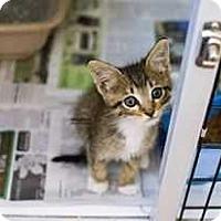 Adopt A Pet :: Maggie - Acworth, GA