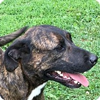 Adopt A Pet :: Muffin - LaGrange, KY