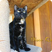 Adopt A Pet :: Disco Queen - Benton, LA