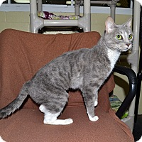 Adopt A Pet :: Gatina - Wheaton, IL