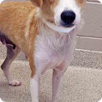 Adopt A Pet :: Lolita - Shorewood, IL