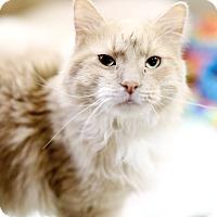 Adopt A Pet :: Danish - Appleton, WI