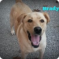 Adopt A Pet :: Brady - Muskegon, MI